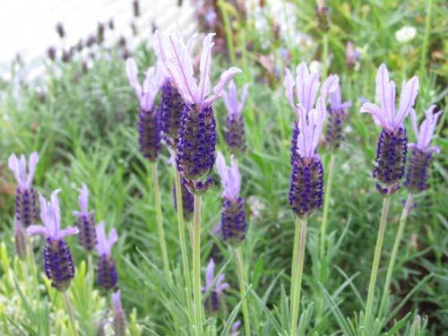 The Lavender Garden Gallery