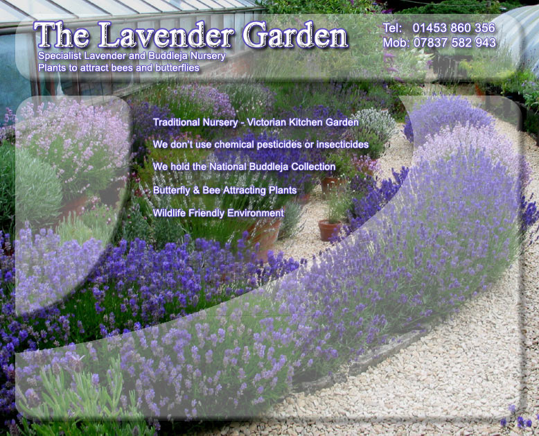 The Lavender Garden - Home